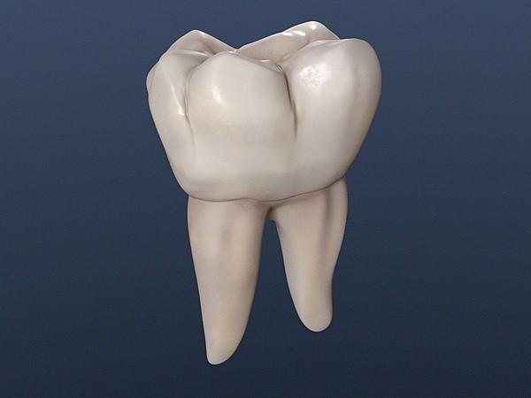 molar inferior